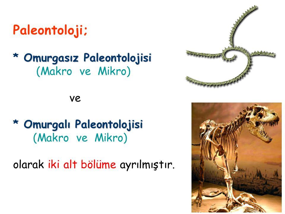 Paleontoloji; Omurgasız Paleontolojisi * Omurgasız Paleontolojisi (Makro ve Mikro) ve Omurgalı Paleontolojisi * Omurgalı Paleontolojisi (Makro ve Mikro) olarak iki alt bölüme ayrılmıştır.