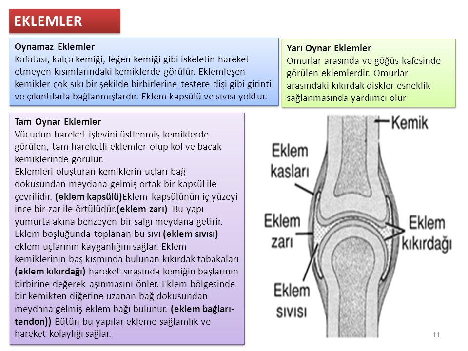 EKLEMLER Oynamaz Eklemler Kafatası, kalça kemiği, leğen kemiği gibi iskeletin hareket etmeyen kısımlarındaki kemiklerde görülür.