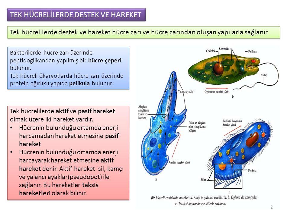 Tek hücrelilerde aktif ve pasif hareket olmak üzere iki hareket vardır.