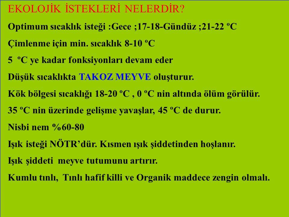 EKOLOJİK İSTEKLERİ NELERDİR? Optimum sıcaklık isteği :Gece ;17-18-Gündüz ;21-22 ºC Çimlenme için min. sıcaklık 8-10 ºC 5 ºC ye kadar fonksiyonları dev