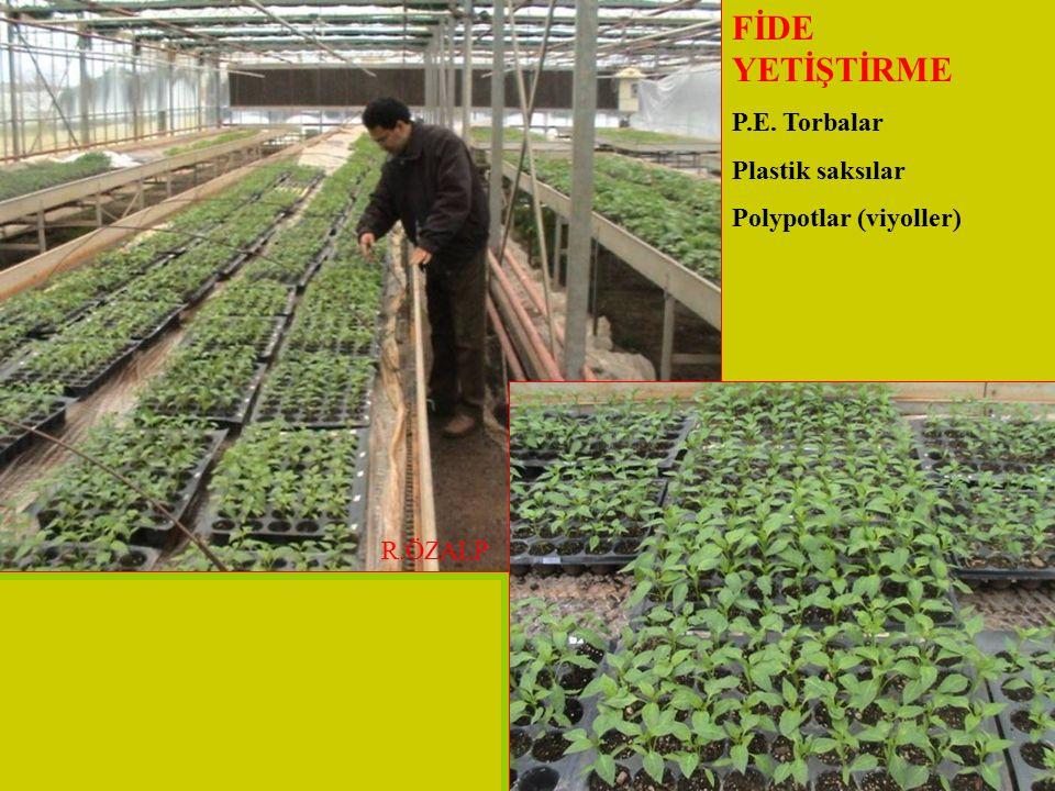 FİDE YETİŞTİRME P.E. Torbalar Plastik saksılar Polypotlar (viyoller) R.ÖZALP