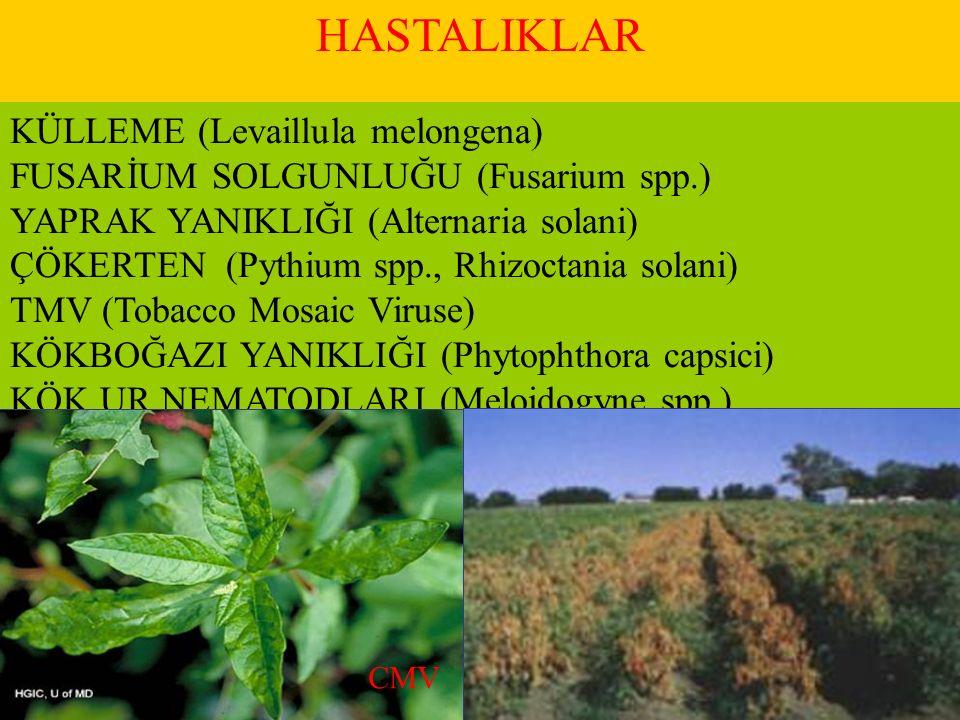 HASTALIKLAR KÜLLEME (Levaillula melongena) FUSARİUM SOLGUNLUĞU (Fusarium spp.) YAPRAK YANIKLIĞI (Alternaria solani) ÇÖKERTEN (Pythium spp., Rhizoctani