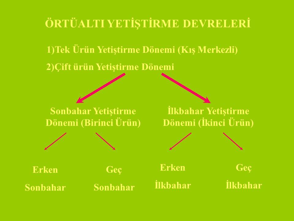 YAPRAKLAR Uzun, Oval, Yuvarlak şekilli, Renk:A.Yeşil, K.