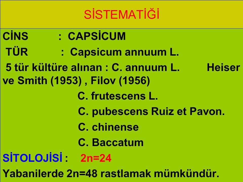 SİSTEMATİĞİ CİNS : CAPSİCUM TÜR : Capsicum annuum L. 5 tür kültüre alınan : C. annuum L. Heiser ve Smith (1953), Filov (1956) C. frutescens L. C. pube