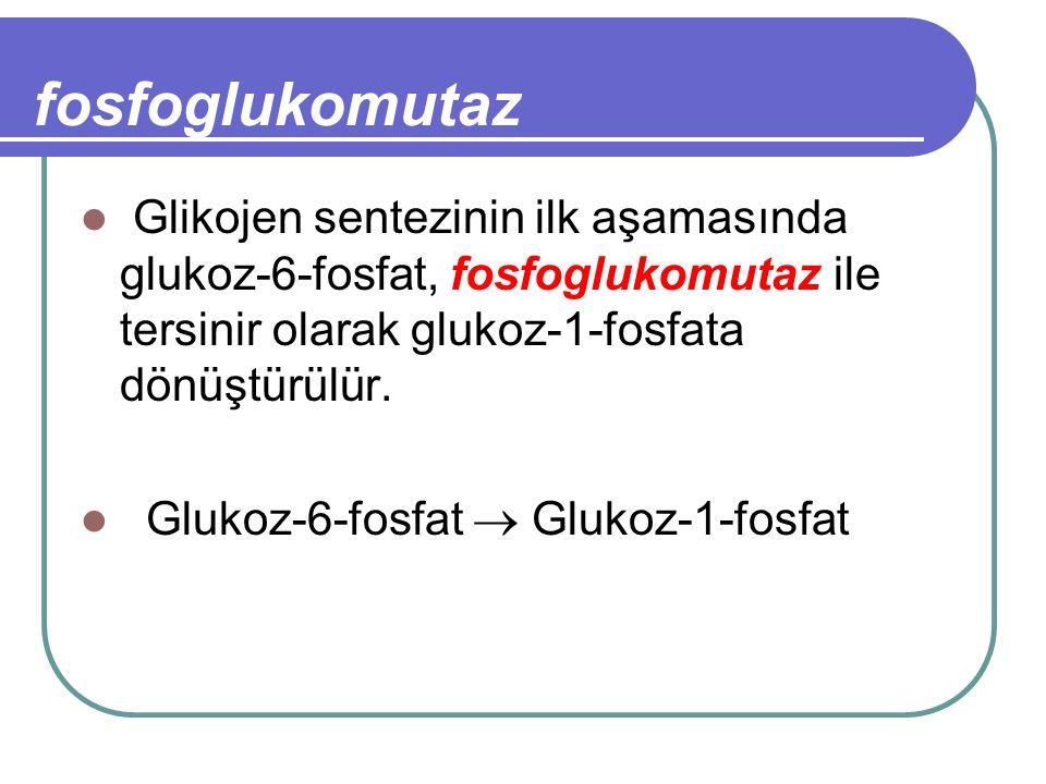 fosfoglukomutaz Glikojen sentezinin ilk aşamasında glukoz-6-fosfat, fosfoglukomutaz ile tersinir olarak glukoz-1-fosfata dönüştürülür. Glukoz-6-fosfat