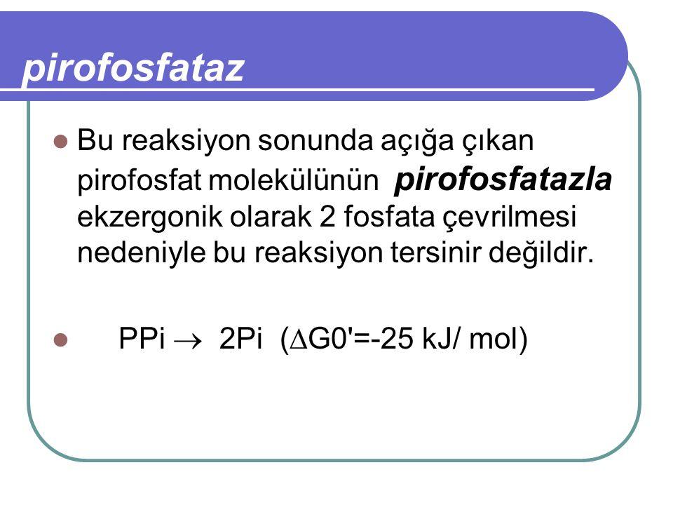 pirofosfataz Bu reaksiyon sonunda açığa çıkan pirofosfat molekülünün pirofosfatazla ekzergonik olarak 2 fosfata çevrilmesi nedeniyle bu reaksiyon ters