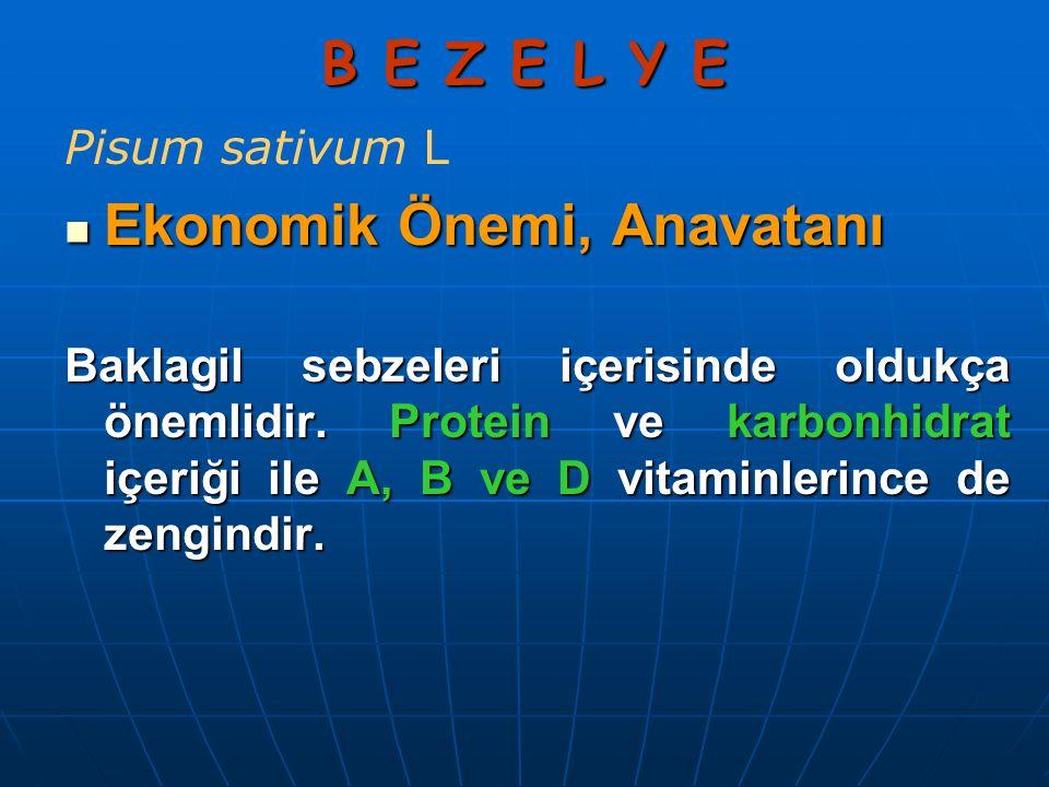 B E Z E L Y E Pisum sativum L Ekonomik Önemi, Anavatanı Ekonomik Önemi, Anavatanı Baklagil sebzeleri içerisinde oldukça önemlidir. Protein ve karbonhi