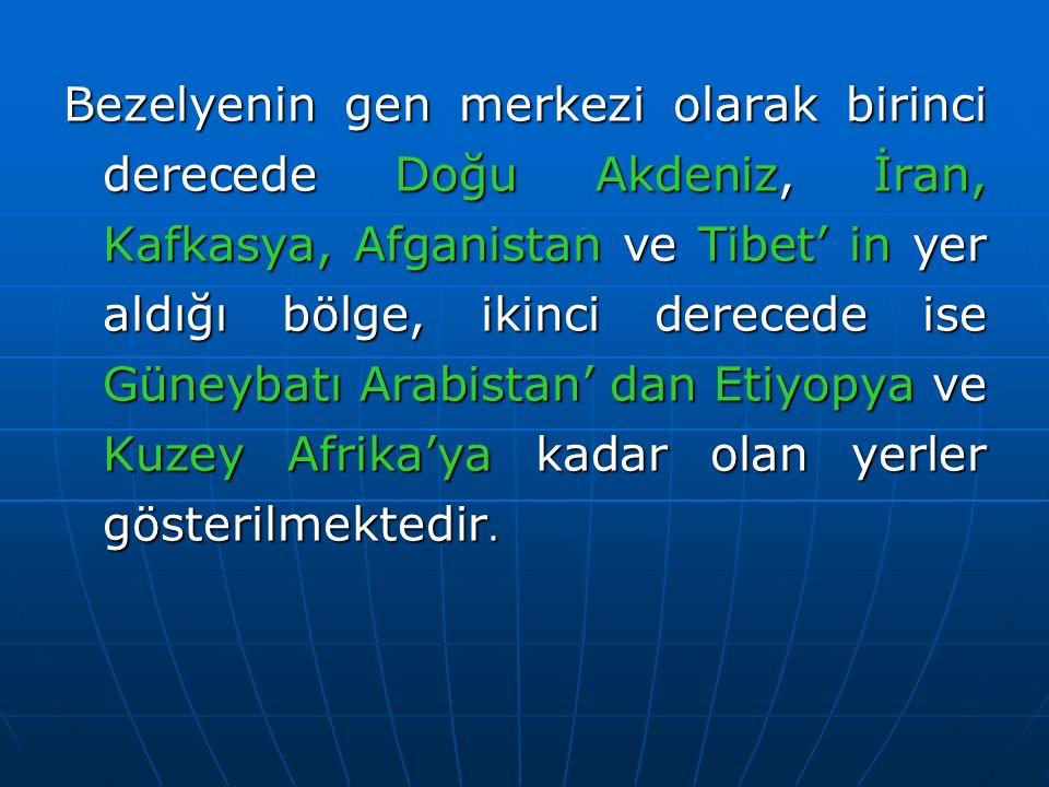 Bezelyenin gen merkezi olarak birinci derecede Doğu Akdeniz, İran, Kafkasya, Afganistan ve Tibet' in yer aldığı bölge, ikinci derecede ise Güneybatı A