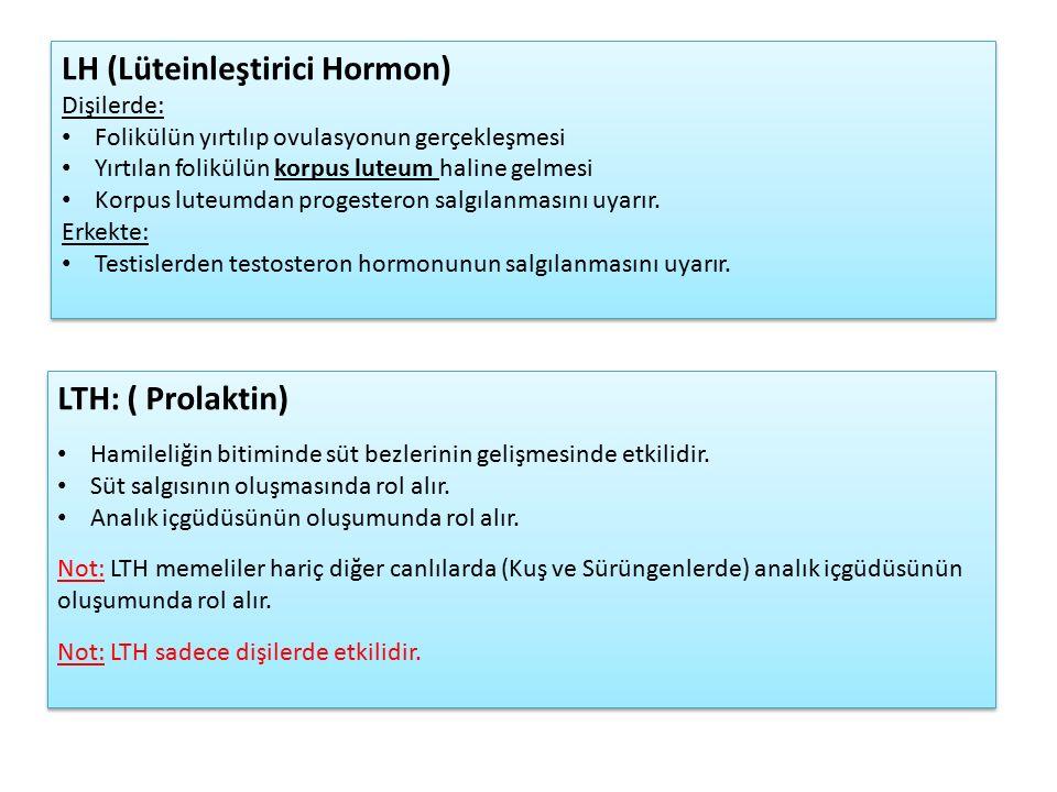 LTH: ( Prolaktin) Hamileliğin bitiminde süt bezlerinin gelişmesinde etkilidir.