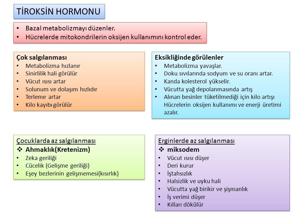 TİROKSİN HORMONU Bazal metabolizmayı düzenler.