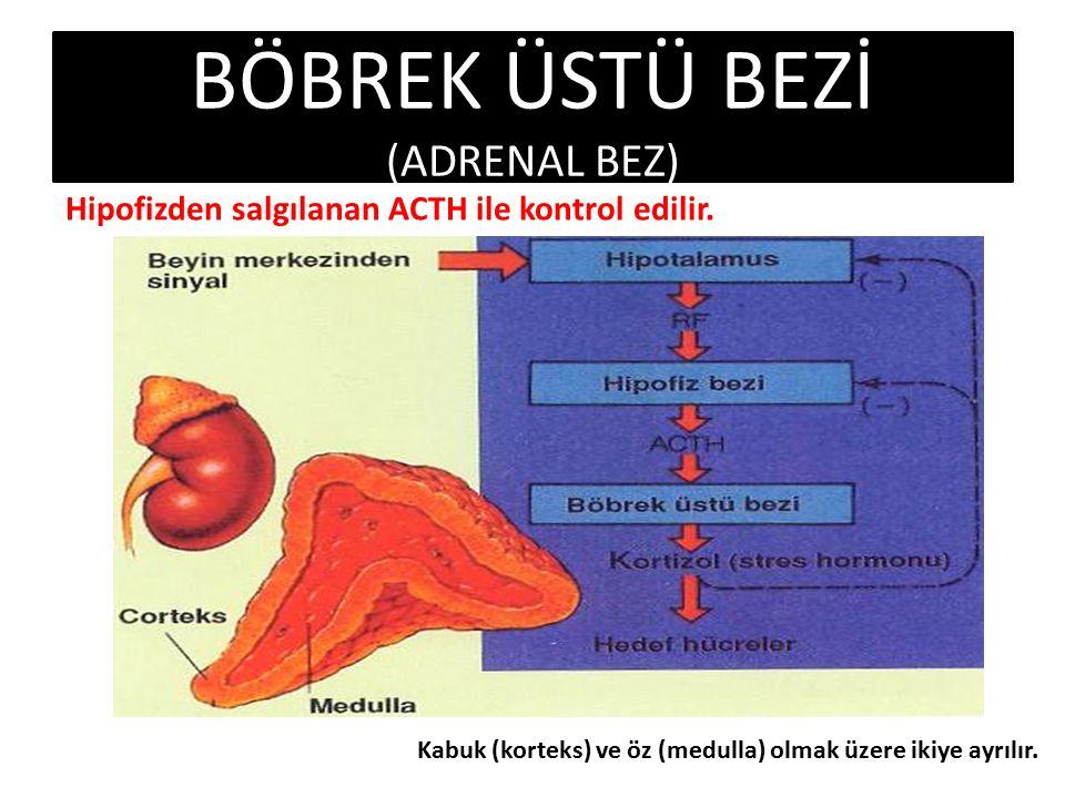 BÖBREK ÜSTÜ BEZİ (ADRENAL BEZ) Hipofizden salgılanan ACTH ile kontrol edilir.