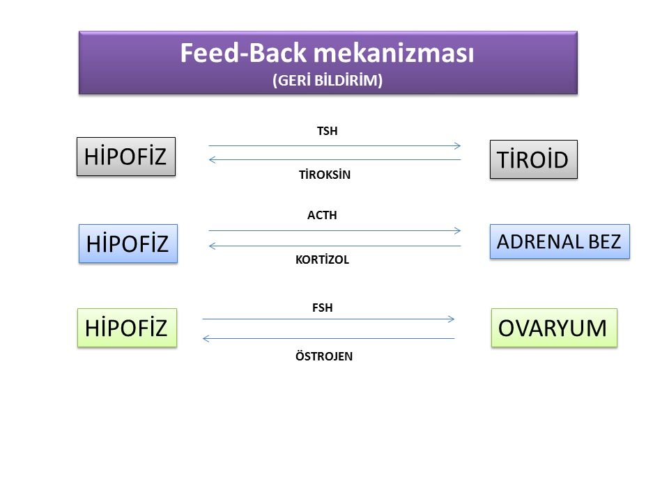 Feed-Back mekanizması (GERİ BİLDİRİM) Feed-Back mekanizması (GERİ BİLDİRİM) HİPOFİZ TİROİD TSH TİROKSİN HİPOFİZ ADRENAL BEZ OVARYUM ACTH KORTİZOL FSH ÖSTROJEN