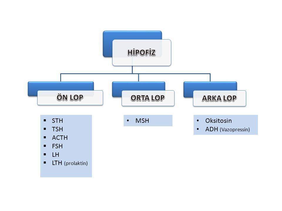  STH  TSH  ACTH  FSH  LH  LTH (prolaktin) MSH Oksitosin ADH (Vazopressin)