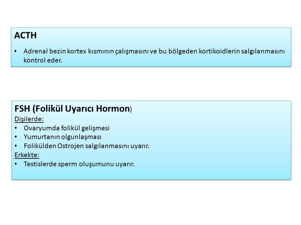 FSH (Folikül Uyarıcı Hormon ) Dişilerde: Ovaryumda folikül gelişmesi Yumurtanın olgunlaşması Folikülden Ostrojen salgılanmasını uyarır.