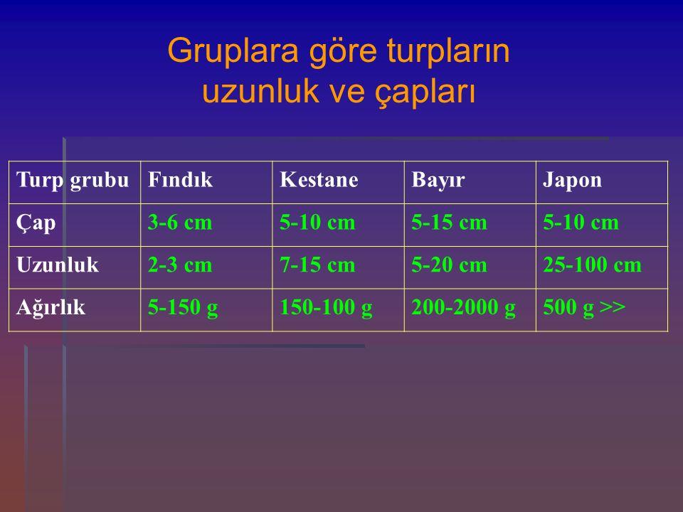 Turp grubuFındıkKestaneBayırJapon Çap3-6 cm5-10 cm5-15 cm5-10 cm Uzunluk2-3 cm7-15 cm5-20 cm25-100 cm Ağırlık5-150 g150-100 g200-2000 g500 g >> Grupla