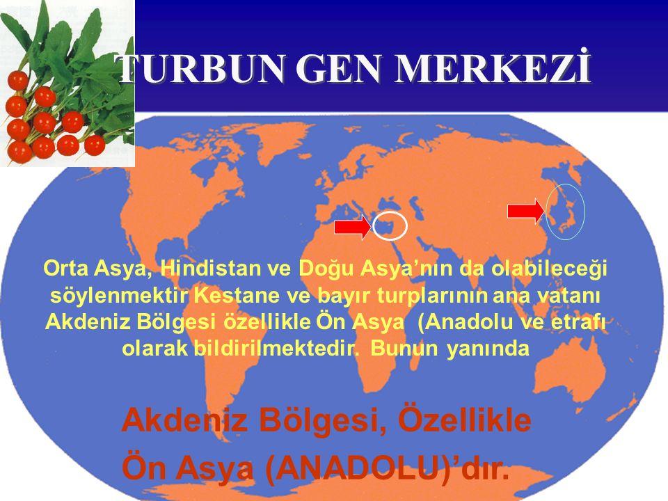 Akdeniz Bölgesi, Özellikle Ön Asya (ANADOLU)'dır. TURBUN GEN MERKEZİ Orta Asya, Hindistan ve Doğu Asya'nın da olabileceği söylenmektir Kestane ve bayı