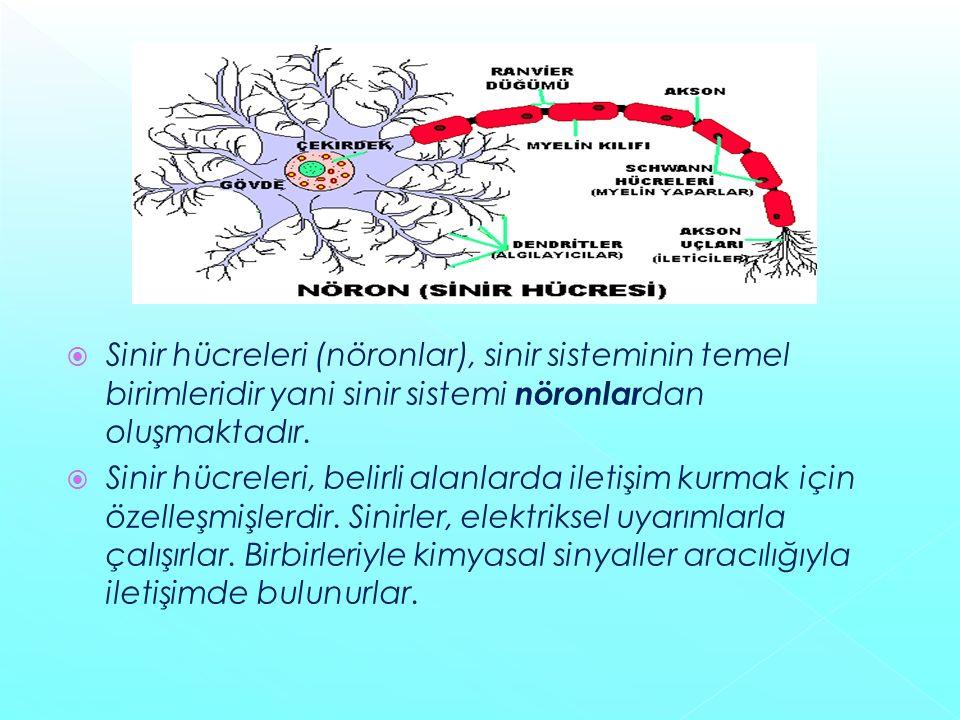  Sinir hücreleri (nöronlar), sinir sisteminin temel birimleridir yani sinir sistemi nöronlar dan oluşmaktadır.