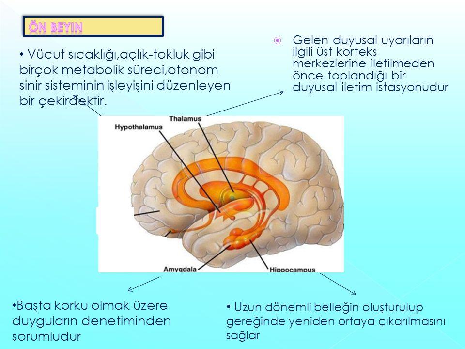  Gelen duyusal uyarıların ilgili üst korteks merkezlerine iletilmeden önce toplandığı bir duyusal iletim istasyonudur Vücut sıcaklığı,açlık-tokluk gibi birçok metabolik süreci,otonom sinir sisteminin işleyişini düzenleyen bir çekirdektir.