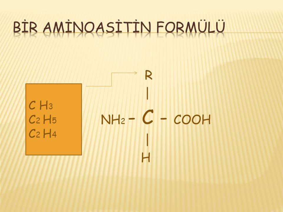 Çok sayıda aminoasidin dehidrasyon sentezi ile birleşip oluşturduğu büyük moleküllere protein denir. Proteinlerin yapı taşı aminoasitlerdir. Aminoasit
