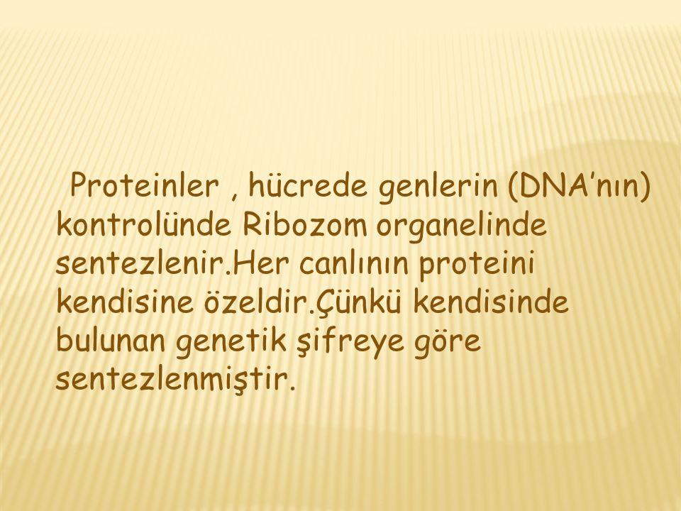 İki aminoasit birleşmiş ise oluşan yapıya dipeptit,üç aminoasit birleşmiş ise tripeptit,üçten fazla aminoasit birleşmiş ise polipeptit adını alır.