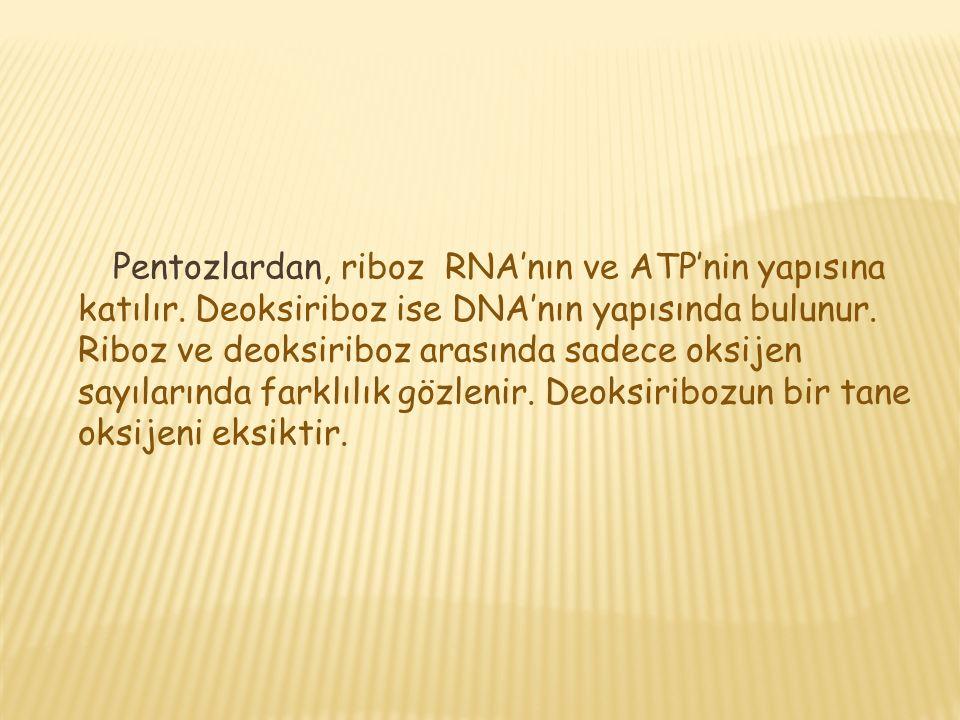 Pentozlardan, riboz RNA'nın ve ATP'nin yapısına katılır.