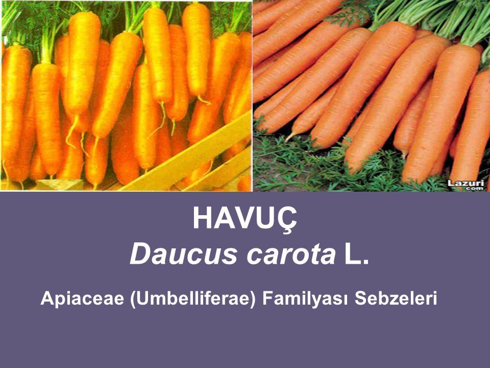 Ekonomik Önemi Anavatanı ve Yayılma Alanları Havuç ülkemizde belli alanlarda önemli miktarlarda üretilip tüketilen bir sebzedir.