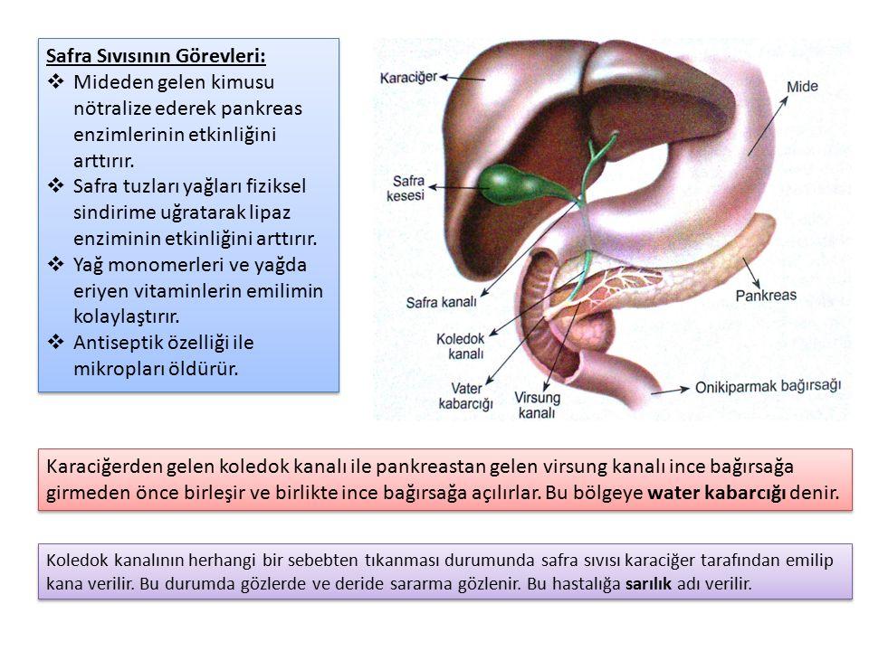 Safra Sıvısının Görevleri:  Mideden gelen kimusu nötralize ederek pankreas enzimlerinin etkinliğini arttırır.  Safra tuzları yağları fiziksel sindir