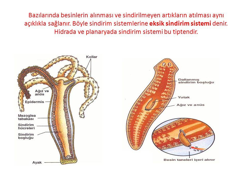 Yuvarlak solucanlardan başlayarak birçok hayvanda, iki açıklıklı ve değişik kısımları özelleşmiş boru şeklinde sindirim kanalı bulunur.