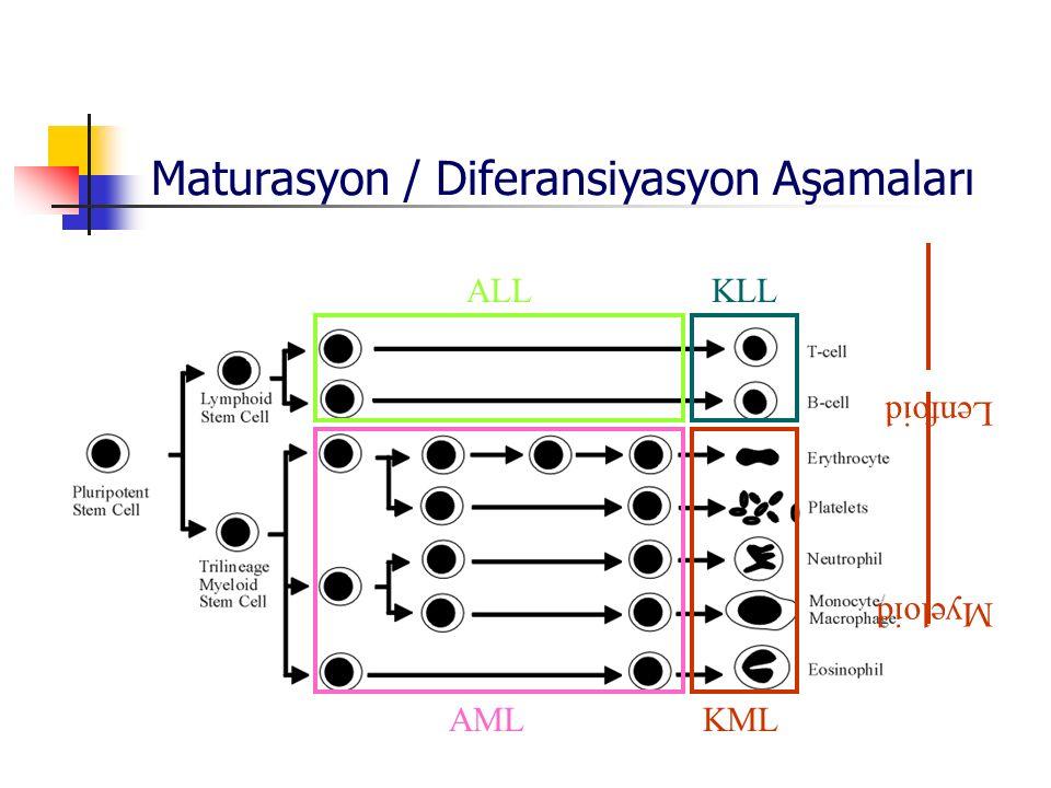 L enfo id Myeloid AMLALLKLLKML Maturasyon / Diferansiyasyon Aşamaları