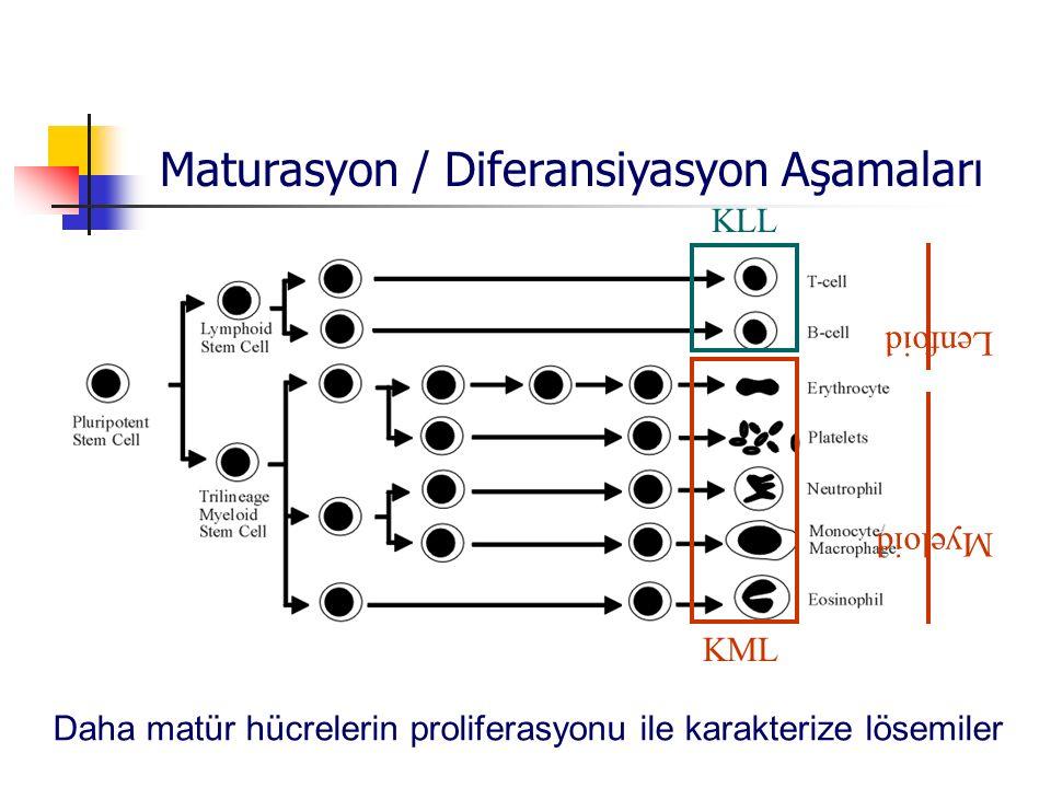 L enfo id Myeloid KLL KML Maturasyon / Diferansiyasyon Aşamaları Daha matür hücrelerin proliferasyonu ile karakterize lösemiler