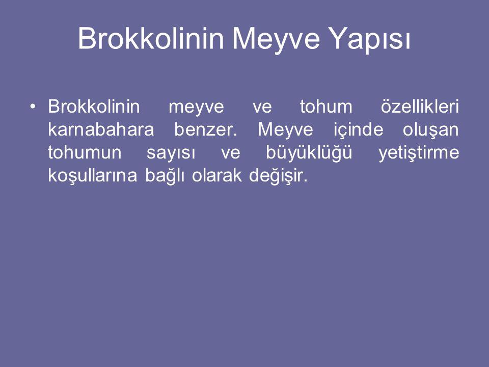 Brokkolinin Meyve Yapısı Brokkolinin meyve ve tohum özellikleri karnabahara benzer. Meyve içinde oluşan tohumun sayısı ve büyüklüğü yetiştirme koşulla