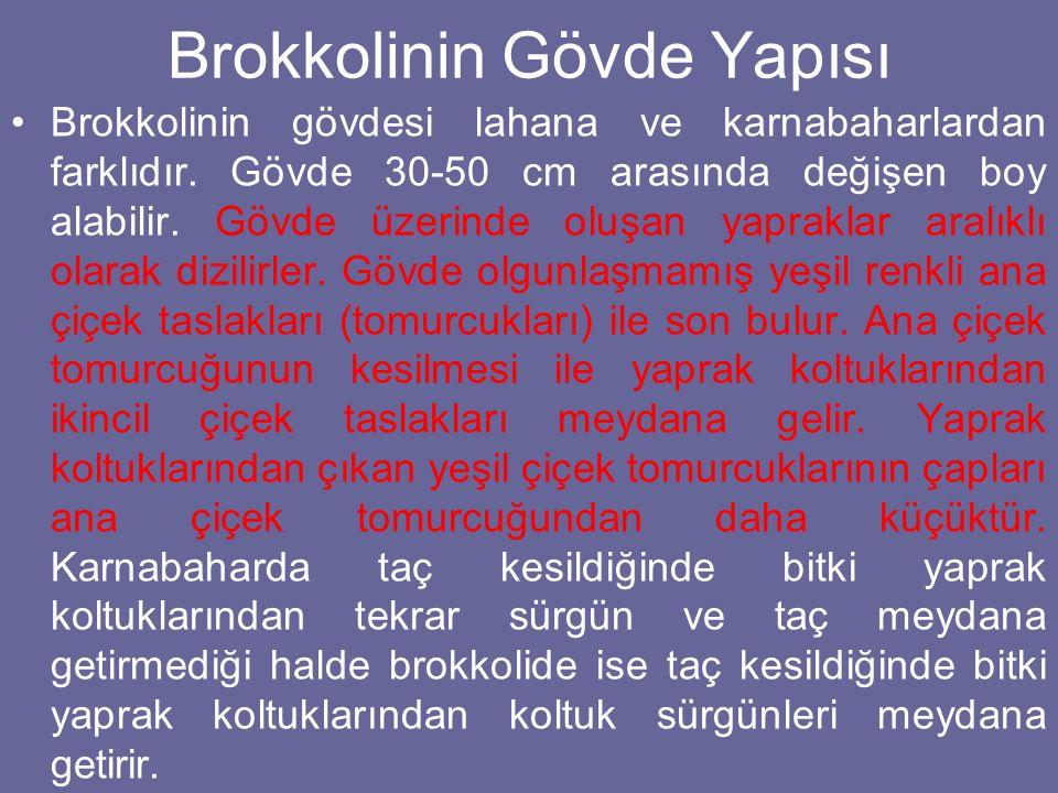 Brokkolinin Gövde Yapısı Brokkolinin gövdesi lahana ve karnabaharlardan farklıdır. Gövde 30-50 cm arasında değişen boy alabilir. Gövde üzerinde oluşan