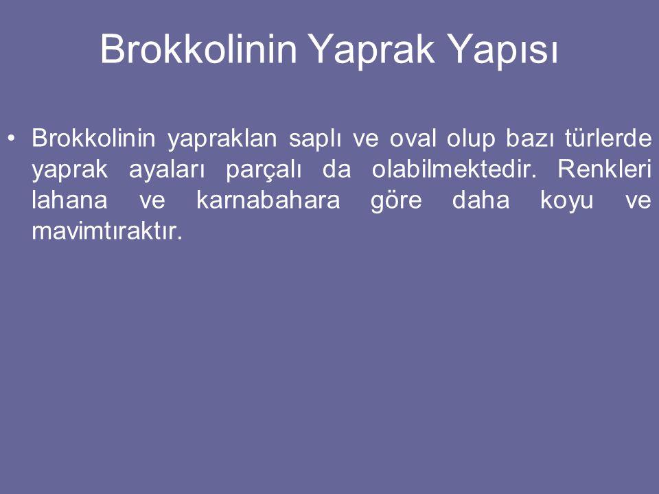 Brokkolinin Yaprak Yapısı Brokkolinin yapraklan saplı ve oval olup bazı türlerde yaprak ayaları parçalı da olabilmektedir. Renkleri lahana ve karnabah
