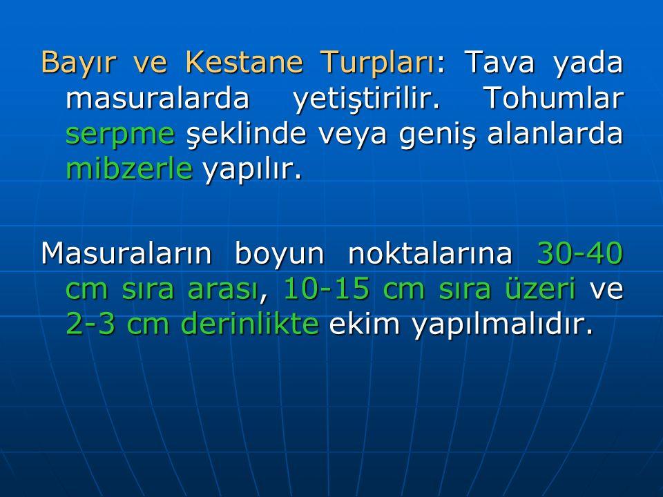 Bayır ve Kestane Turpları: Tava yada masuralarda yetiştirilir. Tohumlar serpme şeklinde veya geniş alanlarda mibzerle yapılır. Masuraların boyun nokta
