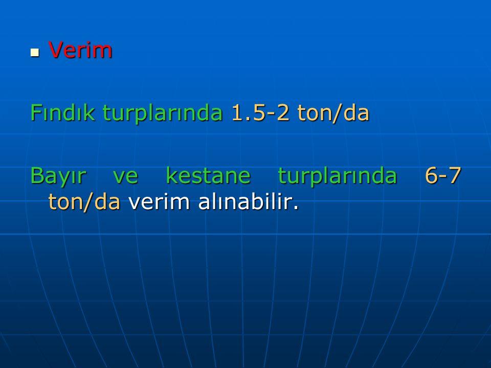 Verim Verim Fındık turplarında 1.5-2 ton/da Bayır ve kestane turplarında 6-7 ton/da verim alınabilir.