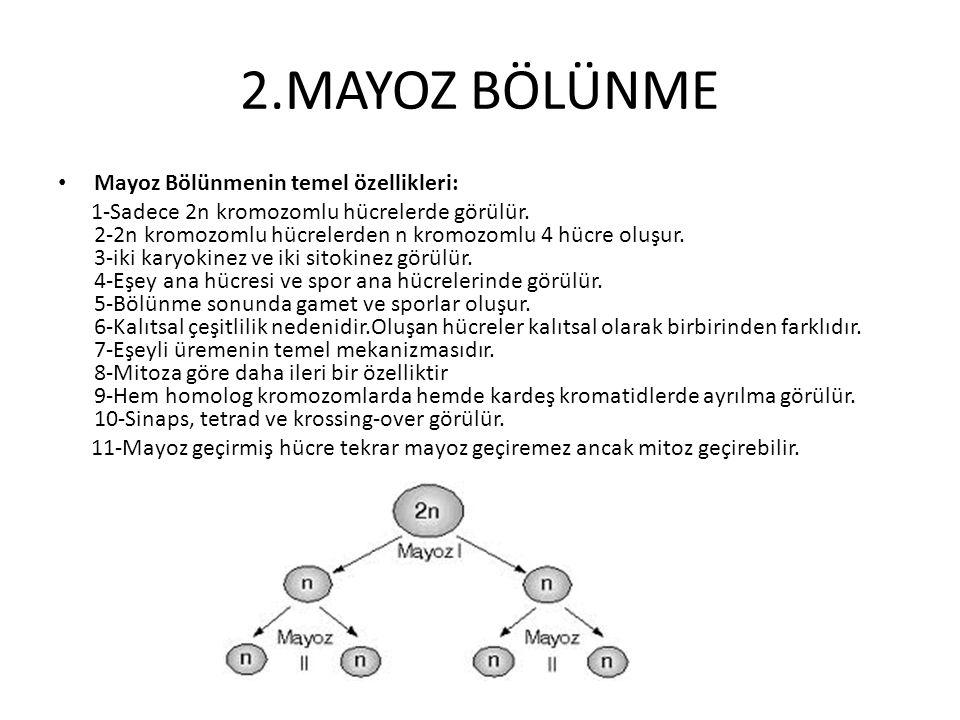 2.MAYOZ BÖLÜNME Mayoz Bölünmenin temel özellikleri: 1-Sadece 2n kromozomlu hücrelerde görülür. 2-2n kromozomlu hücrelerden n kromozomlu 4 hücre oluşur