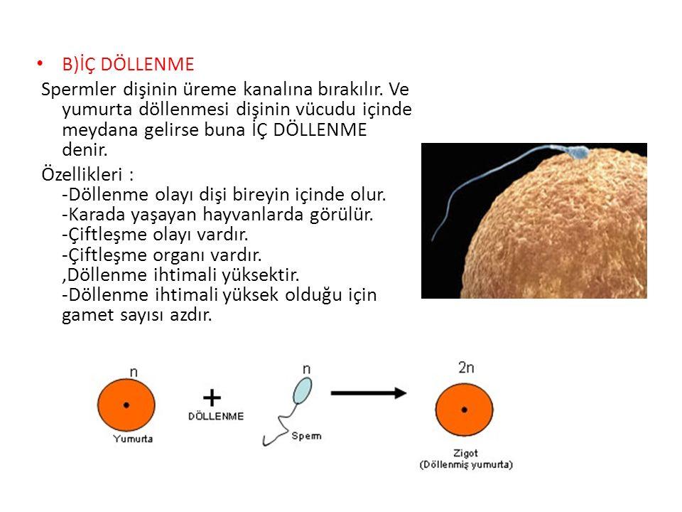 B)İÇ DÖLLENME Spermler dişinin üreme kanalına bırakılır. Ve yumurta döllenmesi dişinin vücudu içinde meydana gelirse buna İÇ DÖLLENME denir. Özellikle