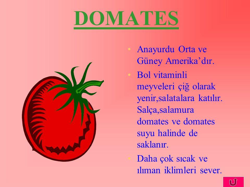 DOMATES Anayurdu Orta ve Güney Amerika'dır. Bol vitaminli meyveleri çiğ olarak yenir,salatalara katılır. Salça,salamura domates ve domates suyu halind