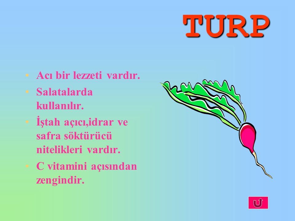 TURP Acı bir lezzeti vardır. Salatalarda kullanılır. İştah açıcı,idrar ve safra söktürücü nitelikleri vardır. C vitamini açısından zengindir.