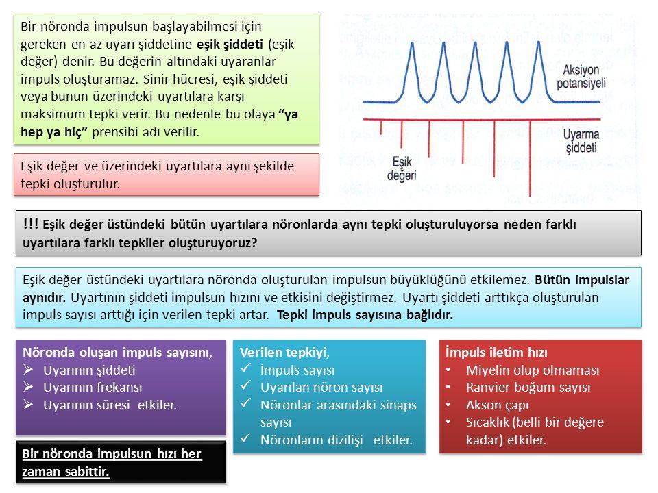 Bir nöronda impulsun başlayabilmesi için gereken en az uyarı şiddetine eşik şiddeti (eşik değer) denir. Bu değerin altındaki uyaranlar impuls oluştura