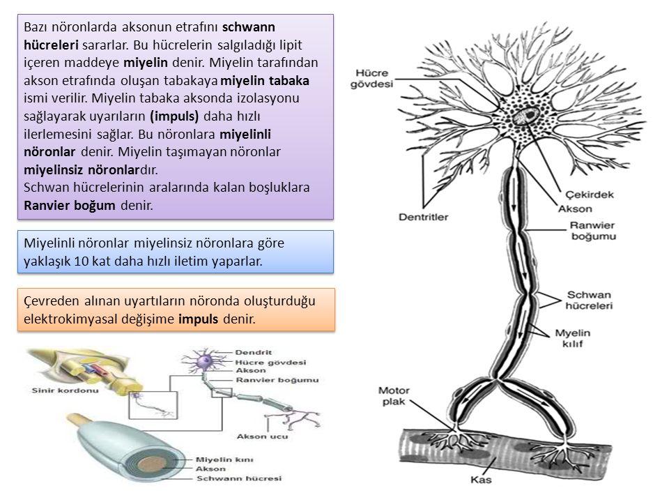Bazı nöronlarda aksonun etrafını schwann hücreleri sararlar. Bu hücrelerin salgıladığı lipit içeren maddeye miyelin denir. Miyelin tarafından akson et