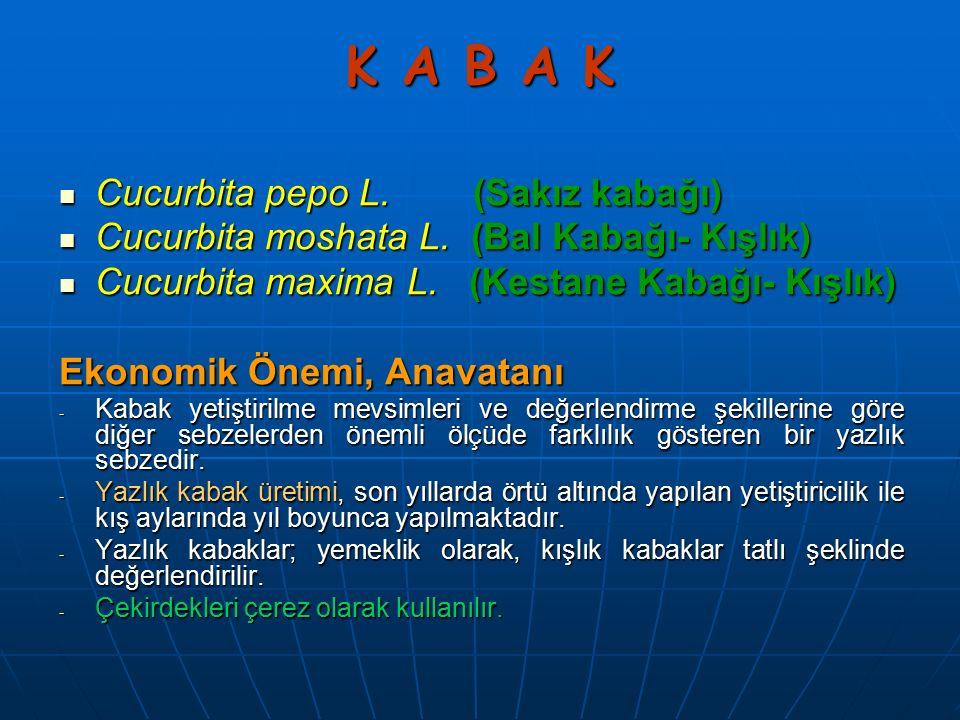 K A B A K Cucurbita pepo L. (Sakız kabağı) Cucurbita pepo L. (Sakız kabağı) Cucurbita moshata L. (Bal Kabağı- Kışlık) Cucurbita moshata L. (Bal Kabağı