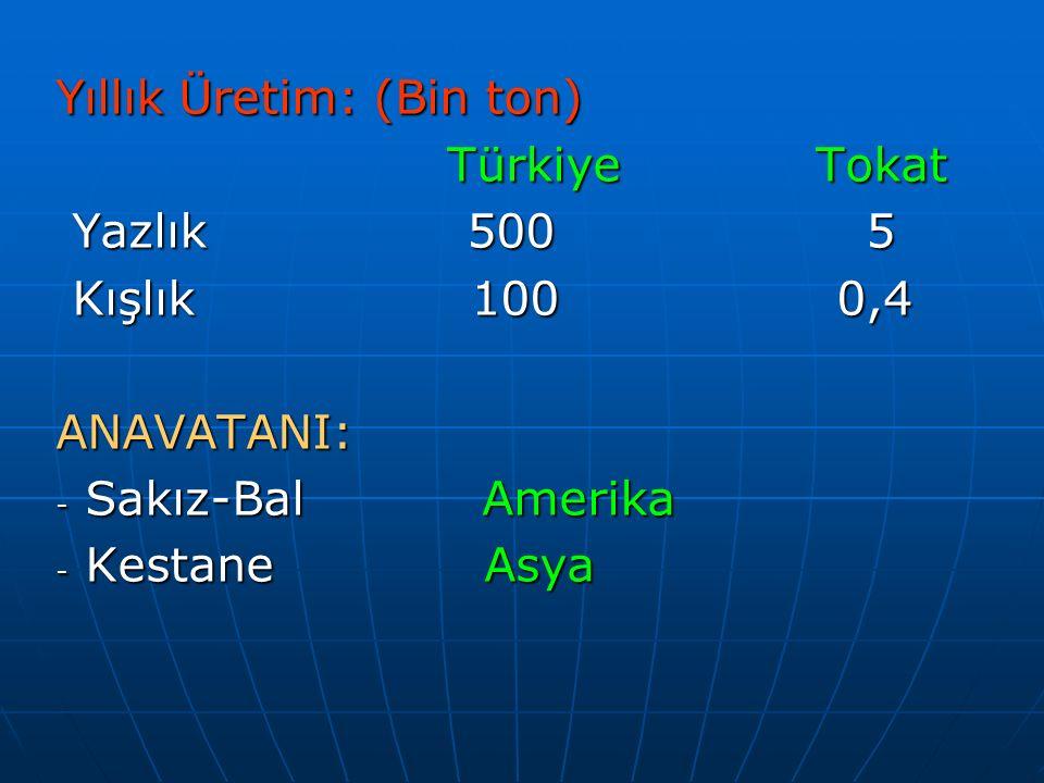 Yıllık Üretim: (Bin ton) Türkiye Tokat Türkiye Tokat Yazlık 500 5 Yazlık 500 5 Kışlık 100 0,4 Kışlık 100 0,4ANAVATANI: - Sakız-Bal Amerika - Kestane A