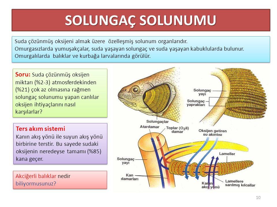 Suda çözünmüş oksijeni almak üzere özelleşmiş solunum organlarıdır.