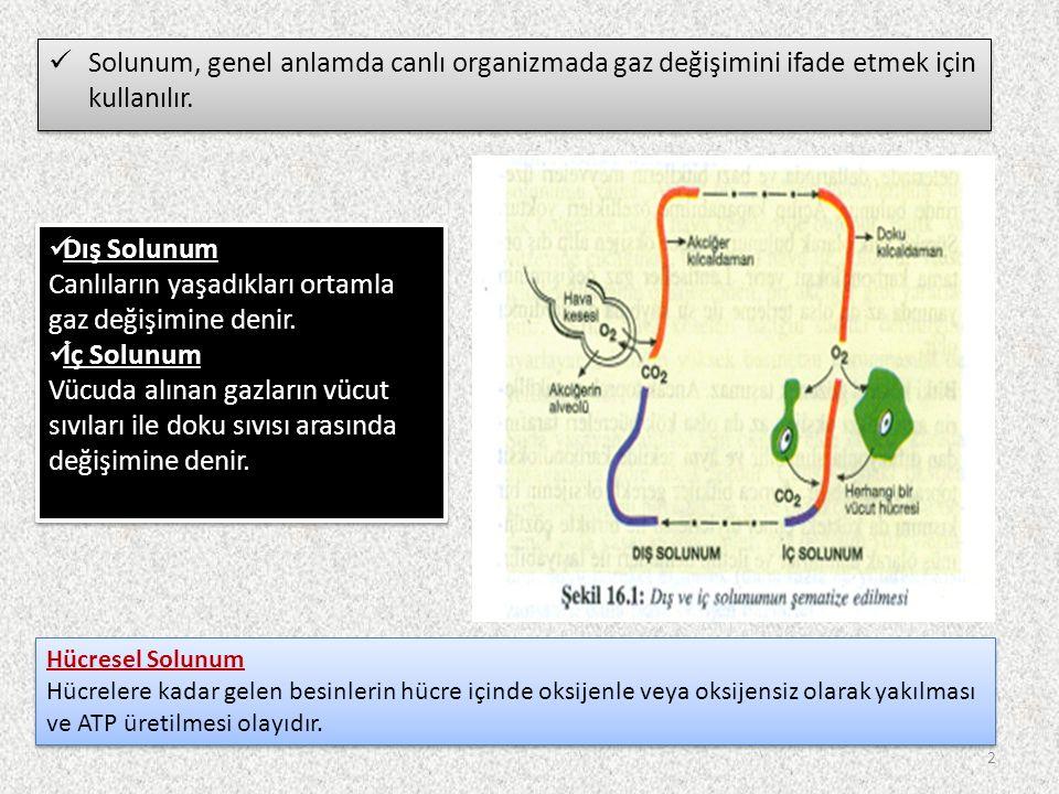 Solunum, genel anlamda canlı organizmada gaz değişimini ifade etmek için kullanılır.