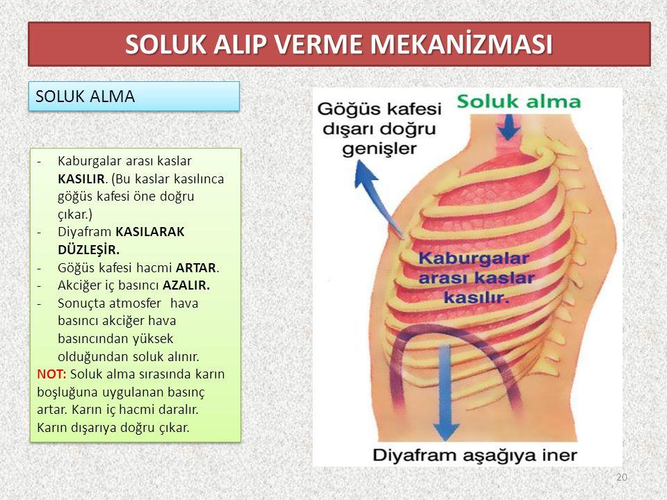 SOLUK ALMA SOLUK ALIP VERME MEKANİZMASI -Kaburgalar arası kaslar KASILIR.