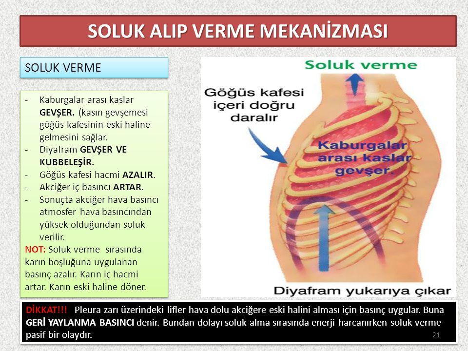 SOLUK VERME SOLUK ALIP VERME MEKANİZMASI -Kaburgalar arası kaslar GEVŞER.
