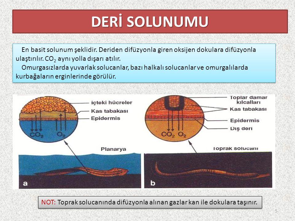 En basit solunum şeklidir. Deriden difüzyonla giren oksijen dokulara difüzyonla ulaştırılır.