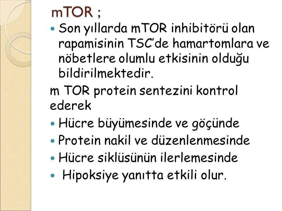 mTOR ; mTOR ; Son yıllarda mTOR inhibitörü olan rapamisinin TSC'de hamartomlara ve nöbetlere olumlu etkisinin olduğu bildirilmektedir. m TOR protein s