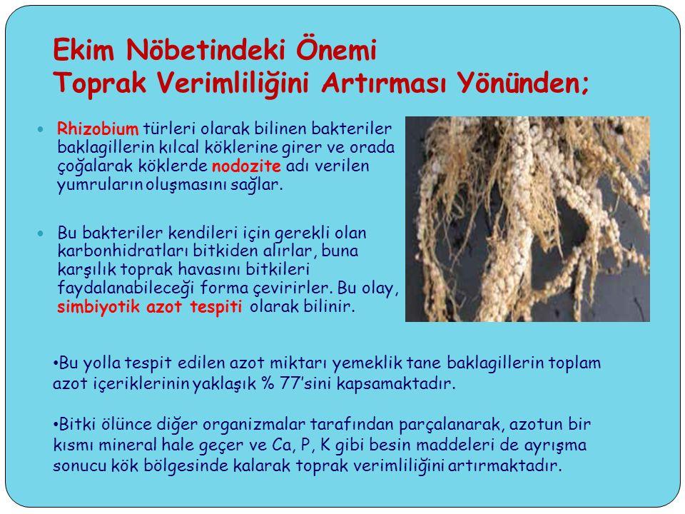 Ekim Nöbetindeki Önemi Toprak Verimliliğini Artırması Yönünden; Rhizobium türleri olarak bilinen bakteriler baklagillerin kılcal köklerine girer ve orada çoğalarak köklerde nodozite adı verilen yumruların oluşmasını sağlar.